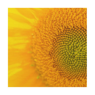 Yellow Floral Sunflowers Wood Wall Art