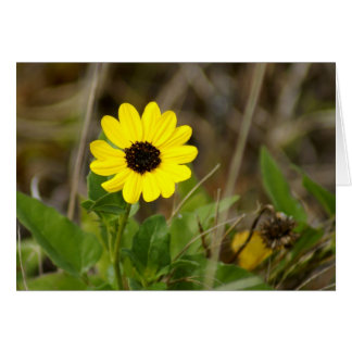 Yellow Florida Wildflower Greeting Cards
