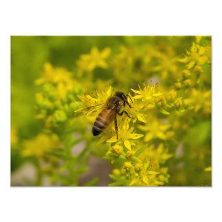Yellow Flower and Honey Bee Maleny 2016 Art Photo