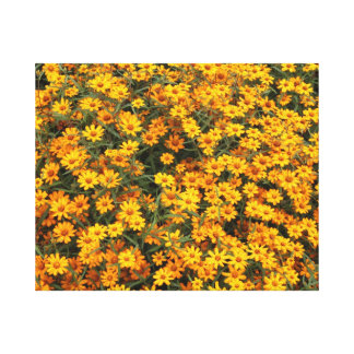 Yellow Flower bed Gallery Wrap Canvas