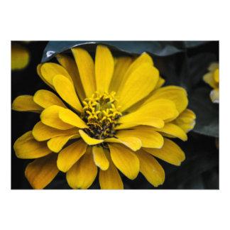 Yellow Flower Blank Invitation