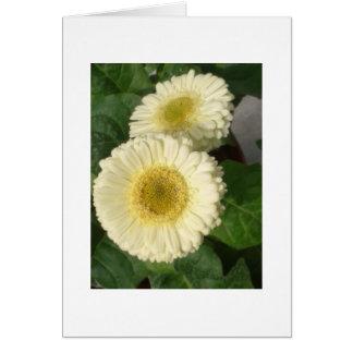 Yellow flower, blanks greeting card