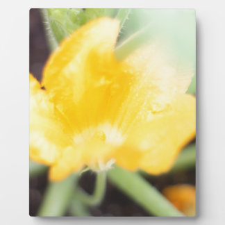 Yellow Flower Bloom Display Plaques