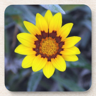 Yellow Flower Drink Coasters