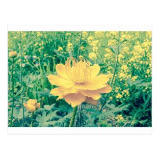 yellow flower crossprocess3 postcard