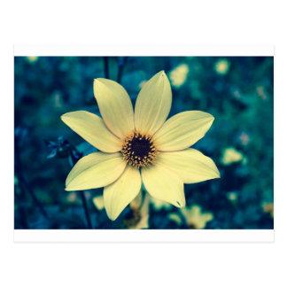 yellow flower crossprocessyellow postcard