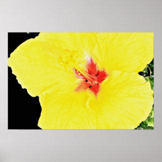 Yellow flower, hybrid hibiscus  flowers print