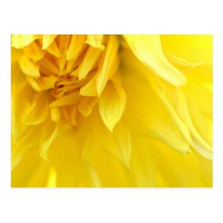 Yellow Flower Petal Post Card