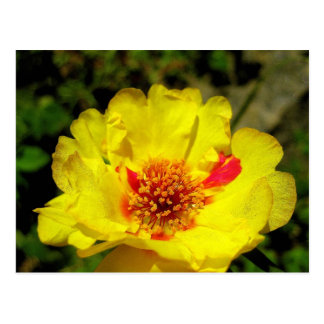 Yellow flower postcard