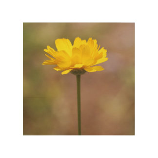 Yellow Flower Standing in the Sun Wood Canvases