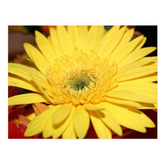 Yellow Flower Sunflower Postcard