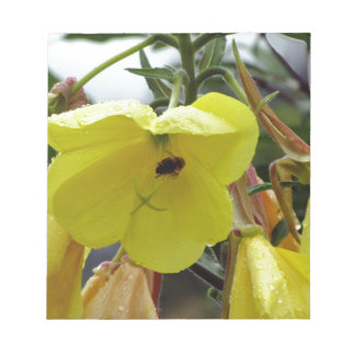 Yellow flowers closeup with water droplets and bee memo notepads