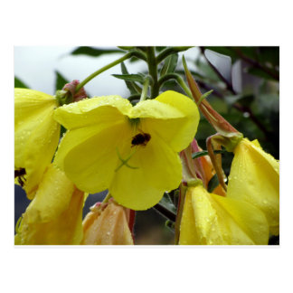 Yellow flowers closeup with water droplets and bee postcard