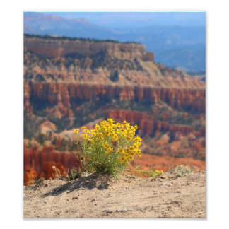 Yellow Flowers Growing Out of Rock at Bryce Canyon Photo Print