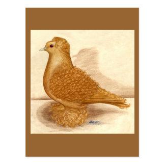 Yellow Frillback Pigeon Postcard
