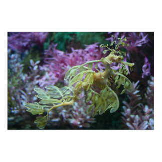 Yellow Frilled Seahorse Poster