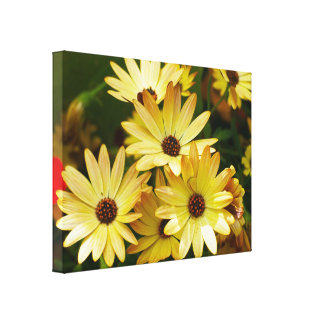 Yellow Gerbera Daisy Flowers Canvas Art Stretched Canvas Print