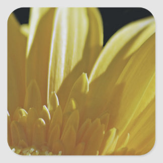 Yellow Gerbera Daisy Square Sticker