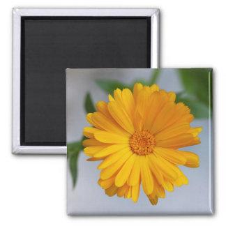 Yellow Gerbera Daisy Wildflower Square Magnet