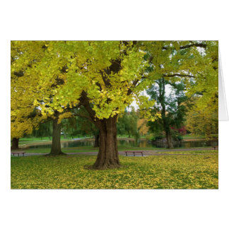 Yellow Ginko Tree in Boston Public Garden Card