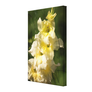 Yellow Gladiolus Flower Spike Canvas Print