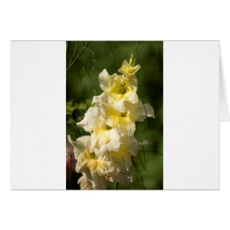 Yellow Gladiolus Flower Spike Card
