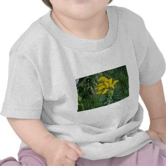 yellow Goldenrod (Solidago Sp.) flowers Tshirts
