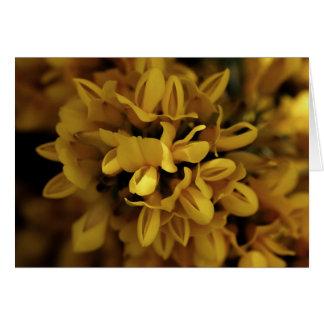 Yellow gorse card