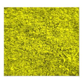 Yellow grass pattern art photo