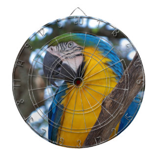 Yellow green and blue tropical Macaw Dartboard