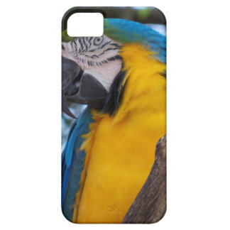 Yellow green and blue tropical Macaw iPhone 5 Covers