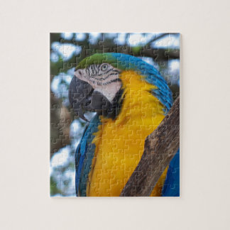 Yellow green and blue tropical Macaw Jigsaw Puzzle