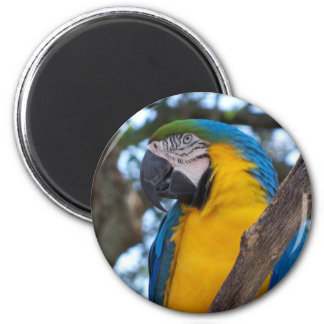 Yellow green and blue tropical Macaw Magnet