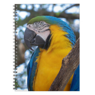 Yellow green and blue tropical Macaw Notebook