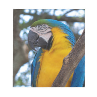 Yellow green and blue tropical Macaw Notepad