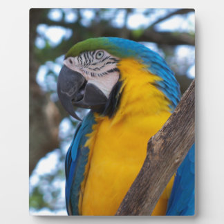 Yellow green and blue tropical Macaw Plaque