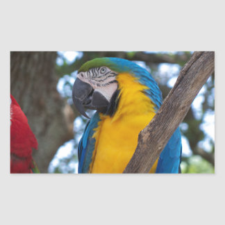 Yellow green and blue tropical Macaw Rectangular Sticker