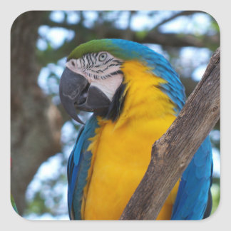 Yellow green and blue tropical Macaw Square Sticker
