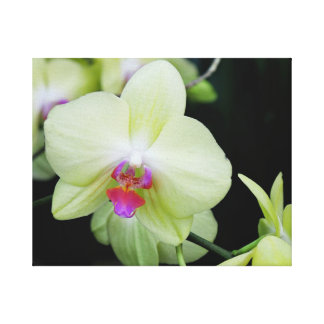 Yellow Green Orchid Canvas Print