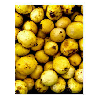 Yellow Guava Postcard
