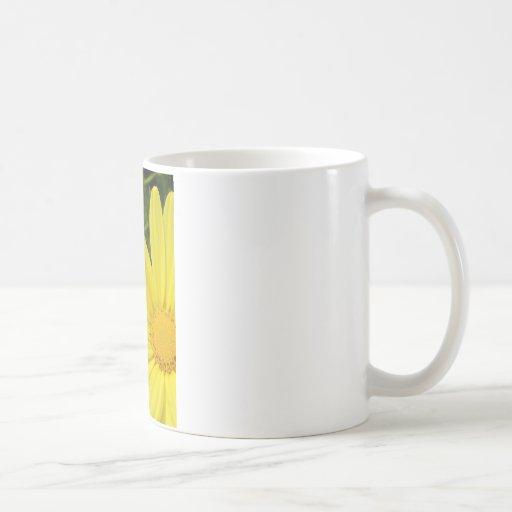 Yellow Half Daisy Mugs