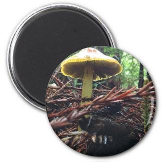 Yellow Hat Mushroom Magnet