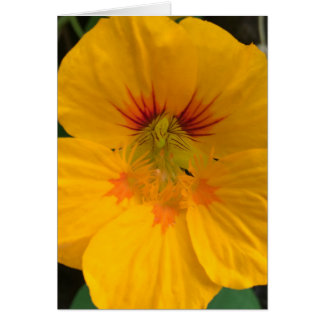 Yellow Hawaiian Flower Notecard (blank) - Aloha! Greeting Card