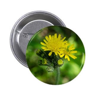 Yellow Hawkweed Wildflower Button
