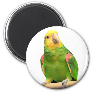 Yellow-headed amazon 6 cm round magnet