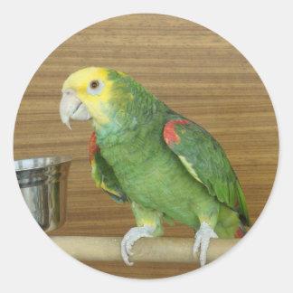 Yellow-Headed Amazon Parrot Stickers