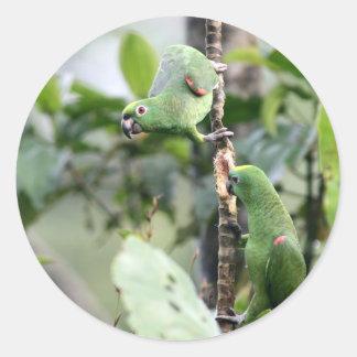 Yellow headed Amazon parrots Sticker