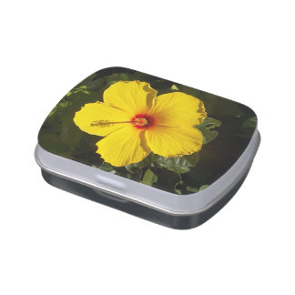 Yellow Hibiscus Flower Jelly Belly Tins