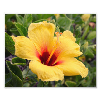 Yellow Hibiscus Flower | Photo Print