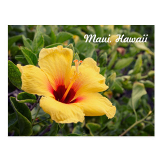 Yellow Hibiscus Flower | Postcard